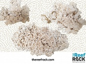 The Reef Rock - Boite de 20 kg MEDIUM - TRR02